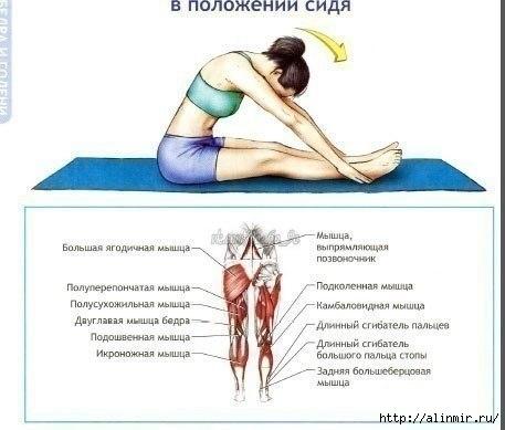 Упражнения на растяжку4 (457x389, 78Kb)