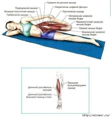 Упражнения на растяжку5 (442x470, 80Kb)