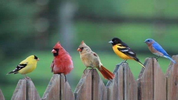 животные птицы (604x340, 88Kb)
