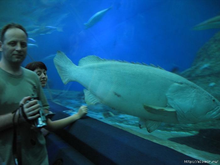 5283370_Tailand_akvariym (700x525, 244Kb)