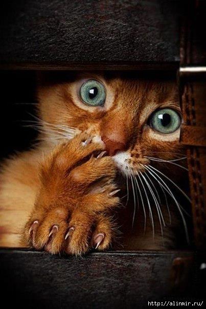 животные кот рыжий (403x604, 129Kb)
