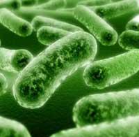 5283370_antibiotiki (200x196, 6Kb)