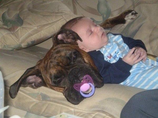 сон дети собака (600x450, 213Kb)