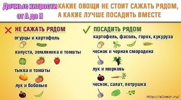 5283370_ovoshi_na_dache (600x332, 134Kb)