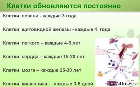 5283370_Obnovlenie_kletok_organov (450x281, 74Kb)