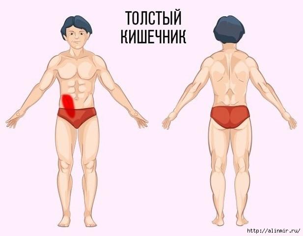5283370_prichina_boli__tolstii_kishechnik (617x480, 88Kb)
