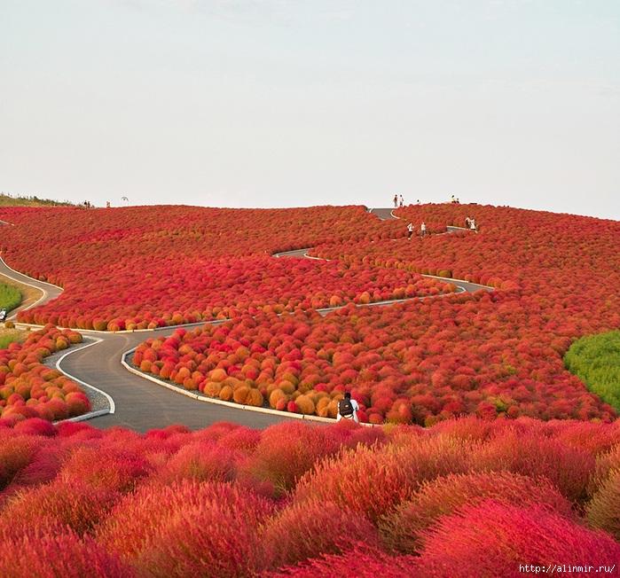 5283370_Nacionalnii_park_Hitachi_Yaponiya_2 (700x652, 377Kb)
